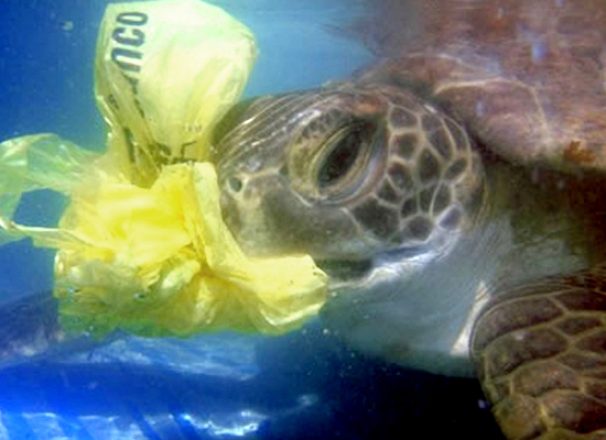 our oceans clean